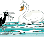 swan&crow